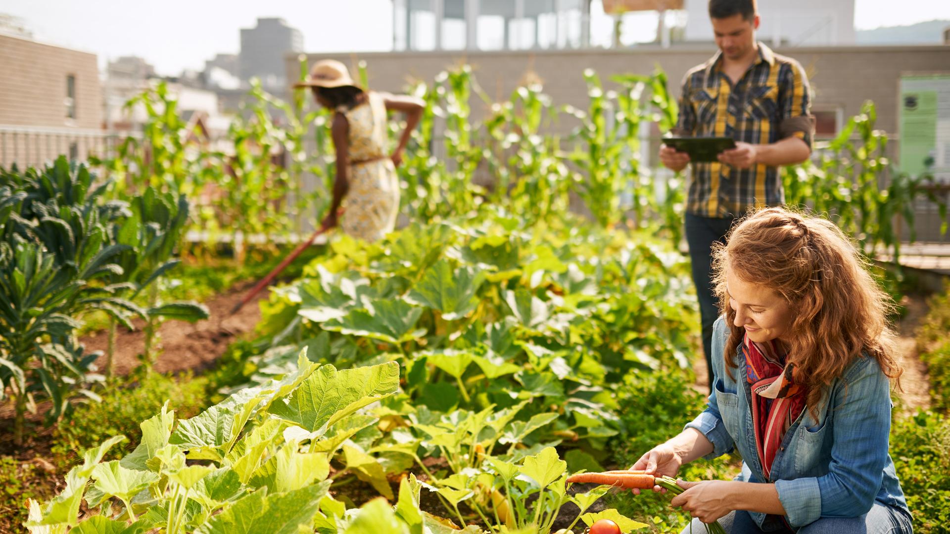 Découvrir l'horticulture ornementale
