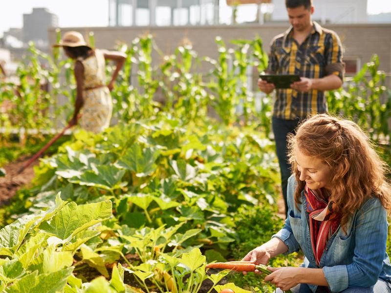 Decouvrir l'horticulture ornementale