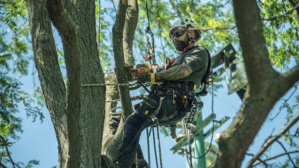 Formation en arboriculture