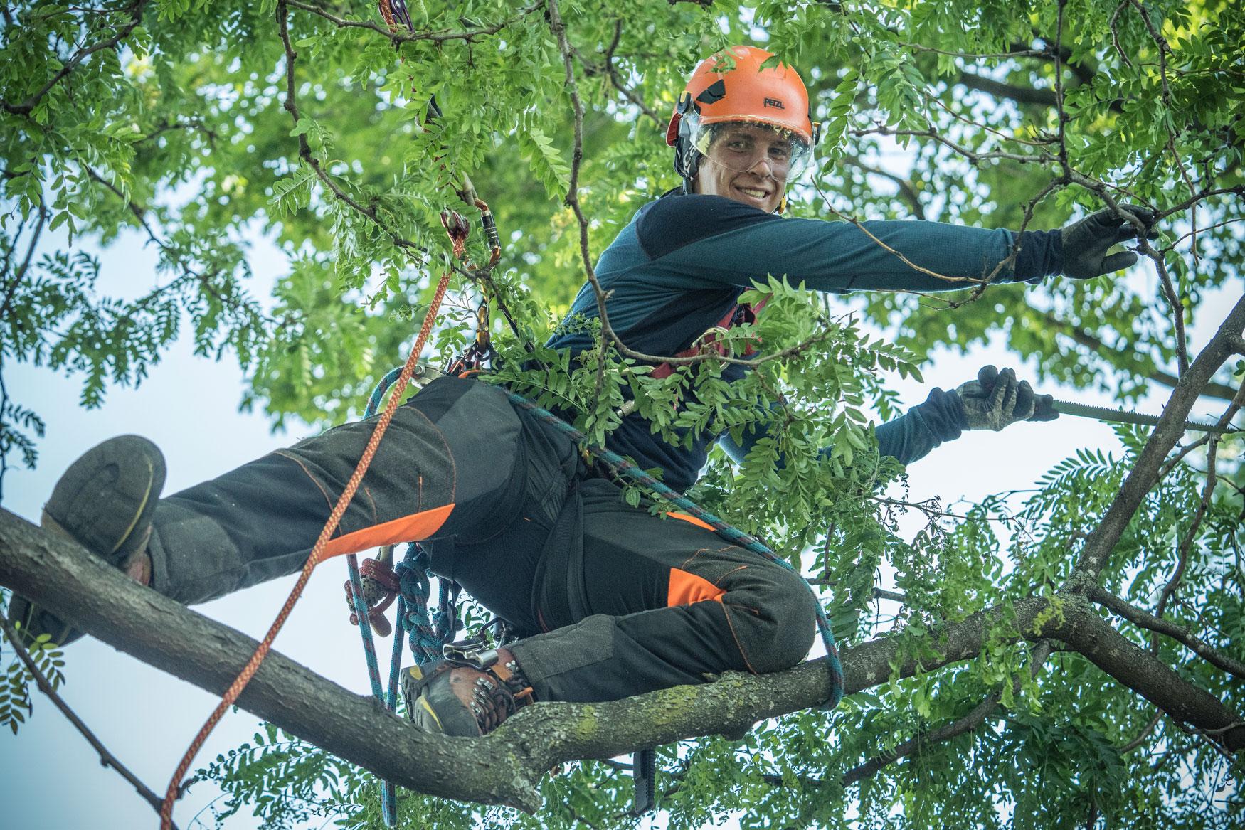 Arboriculture : formation préparatoire à la certification ISA